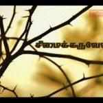 Do You Know About juliflora Tree? (Seemai Karuvelam)